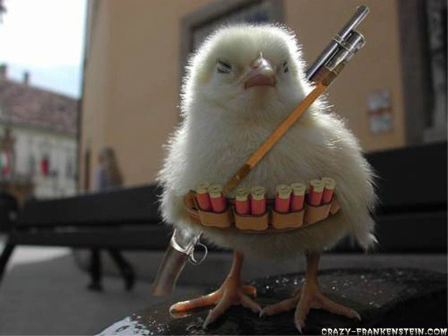 funny-wallpapers-chicken-war