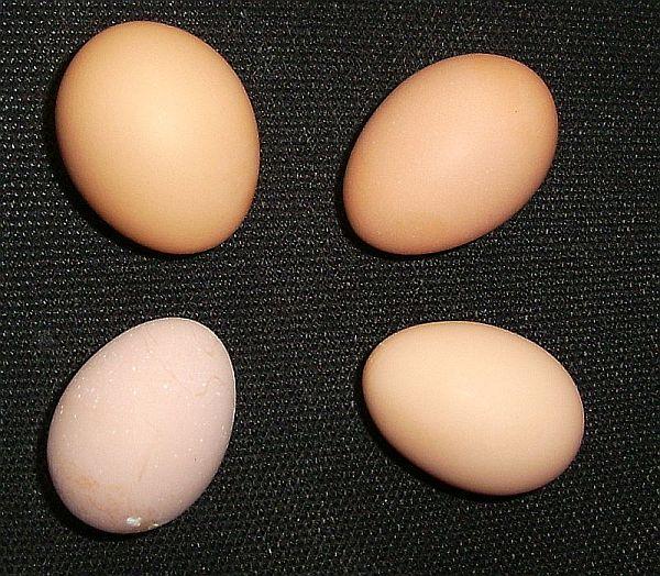 buff_egg