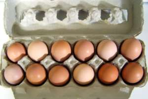 Eggs from Delaware chickens like Lily