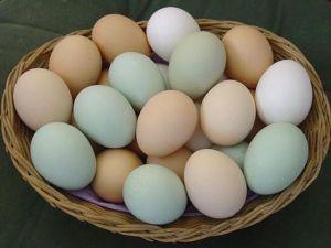 """Eggs from """"Easter Egger"""" chickens like Autumn"""