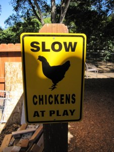 The Chicken Emperor was anxious to get this sign up
