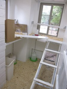 """The CE made """"chicken ladders"""" so they can reach their """"second floor walk-up"""". Note the hanging feeder and waterer."""