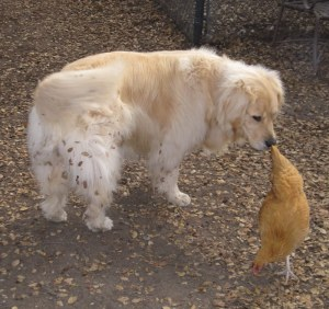 """Maybe this is what is known as a """"bird dog""""?"""