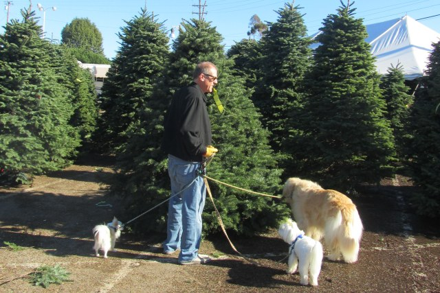 The Christmas Tree committee