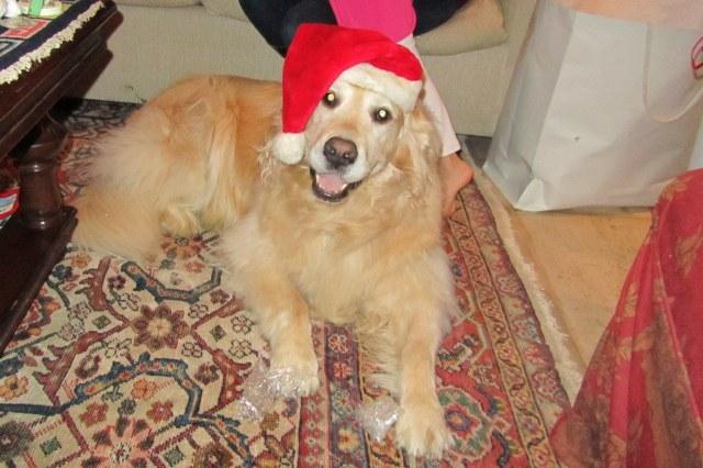 Ho ho ho, it's Santa Chloe!
