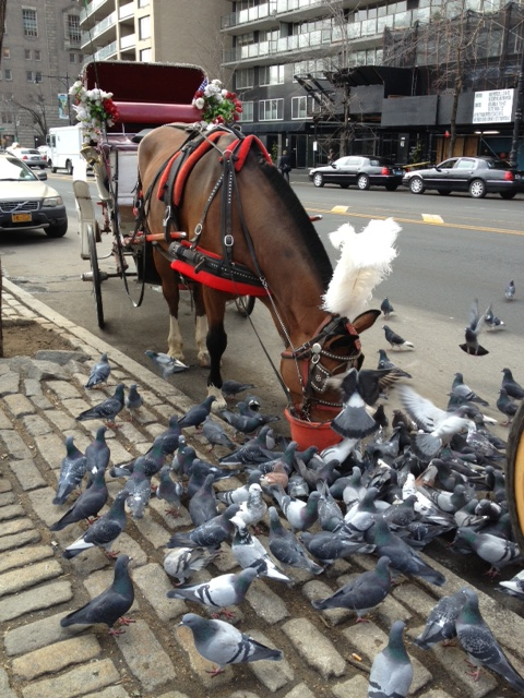 I love the way the horses share with the pigeons