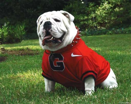 Uga, the University of Georgia bulldog mascot (image from smokingmeatforums.com)