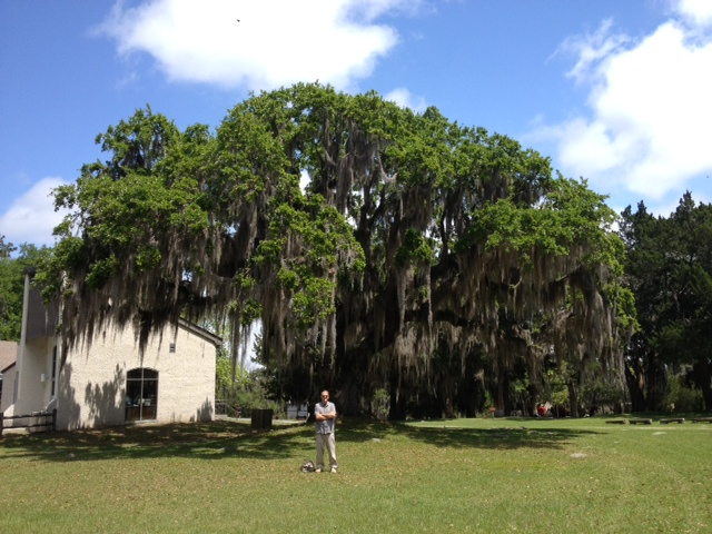 And everywhere, the live oaks festooned with Spanish moss. Great memories!