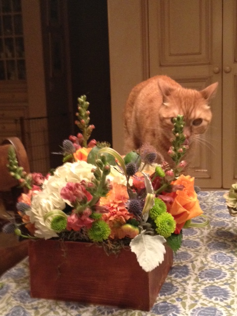 Our own tiger on the prowl. Thanks for the beautiful flowers, everyone!