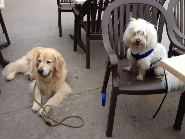 Next morning, the dogs enjoyed breakfast with us at East Beach Grill - also dog-friendly.