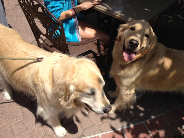Chloe made lots of friends at the pet-friendly Doubletree, including this look-alike beauty on the right.