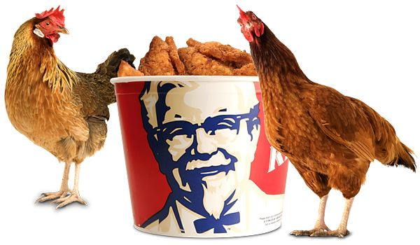 Yes, chickens eat chicken.  Live with it. (image from libertynews.com)