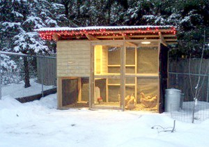 Winter's light: artificial light in the coop equals more eggs laid (image from bestofcluck.com)