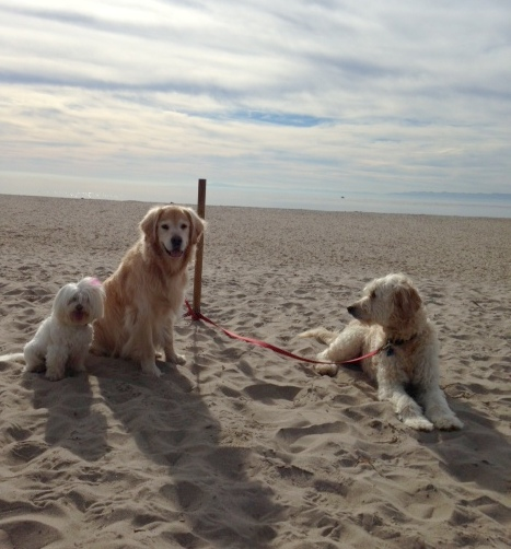 Soho, Chloe and Oliver relax on the beach. Thanks, Tammy and Tom!