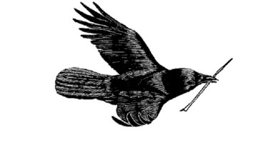 "Tony Angell's marvelous drawings are reason enough to acquire a copy of ""In the Company of Crows and Ravens"" (image from yalepress.yale.edu)"