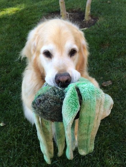 """But wait - who's going to take me and my octopus for a walk?"""