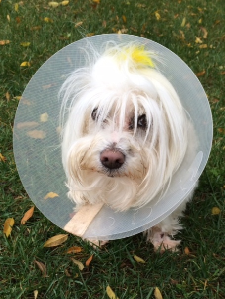 No party for her: sad  little cone Tart.