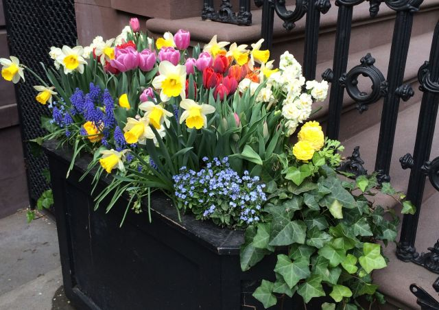 I came across this lovely sight in the West Village.
