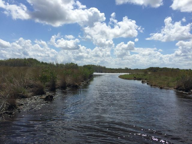 There were lots of twists and turns on the river; if you like roller coaster rides, you'll love being on an airboat.