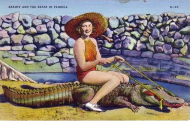 A vintage Florida postcard (image from flaglerlive.com)
