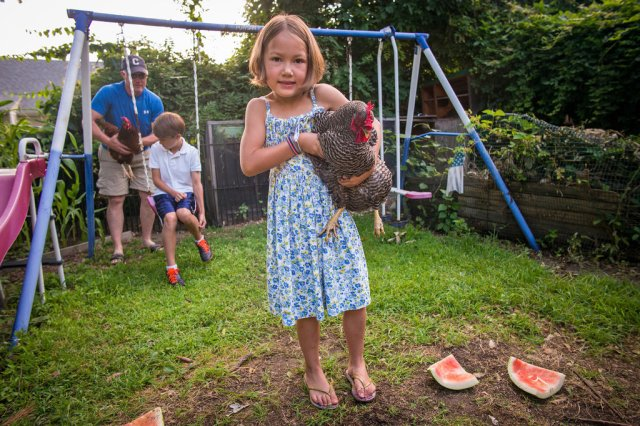 6-year-old Riley Harrigan and her Barred Rock were featured in a recent  NYT article about chicken and bee-keeping in the city. (NYT photo)