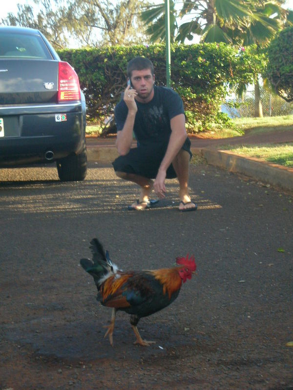Taylor watches a Kauai chicken cross the road back in 2007.