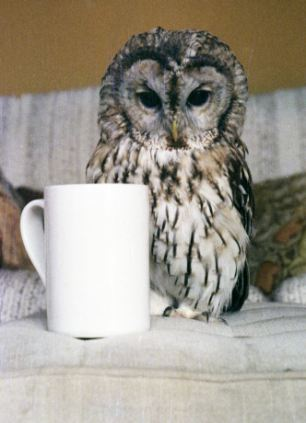 Mumble the Tawny Owl was just a bit taller than a coffee mug. (Image from Daily Mail)