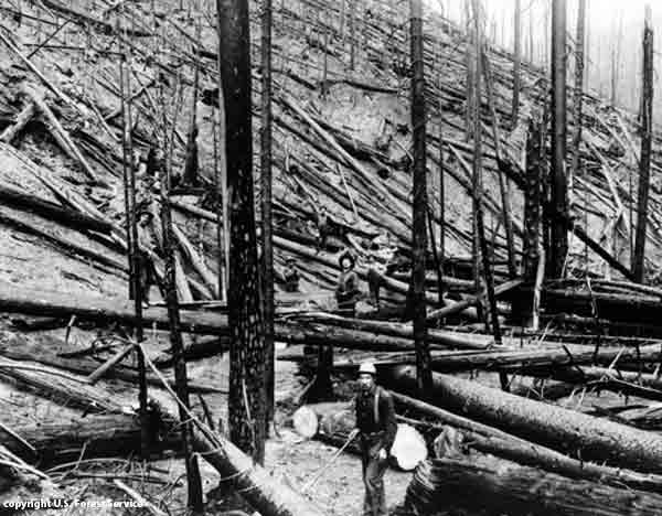 The 1910 forest fire swept through Washington, Montana and Idaho (image from amazon.com)