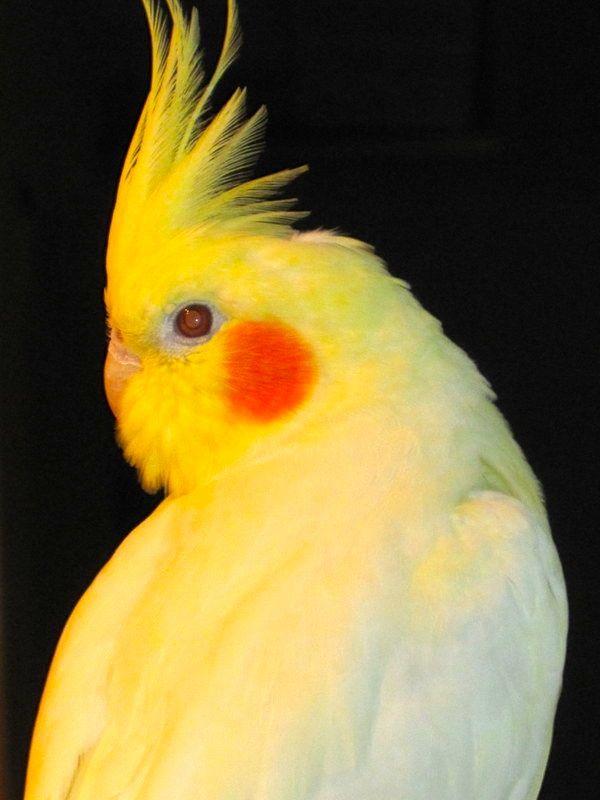 birdie closeup enh