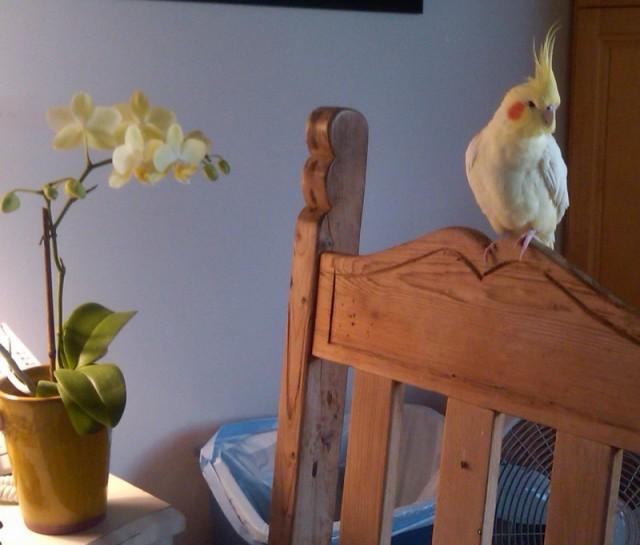 birdpoolhouse