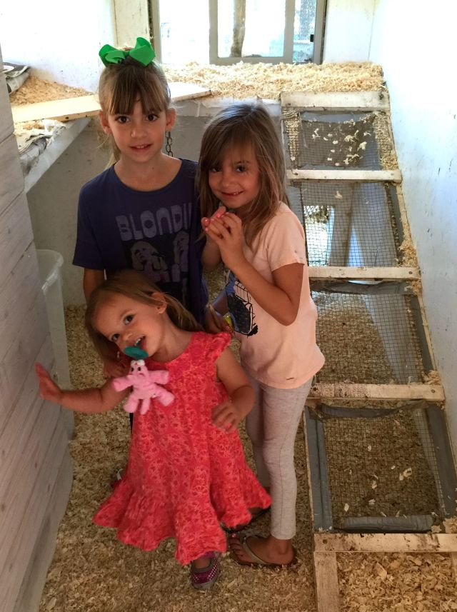 Evie, Viv and Caleigh in the coop.