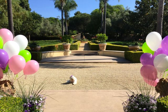 Balloons are in place. The birthday girl awaits her guests.