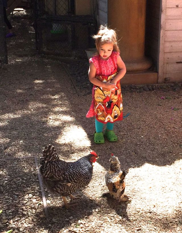 Caleigh quickly became a chicken expert.