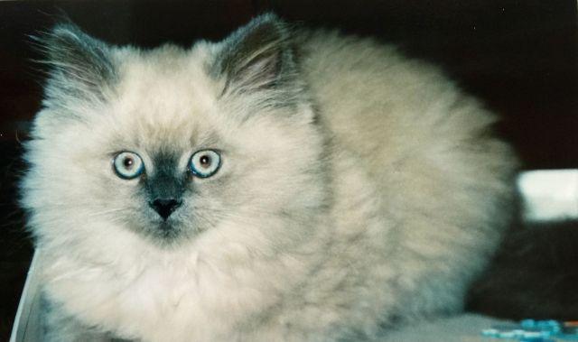 Cody kitten back in 2002