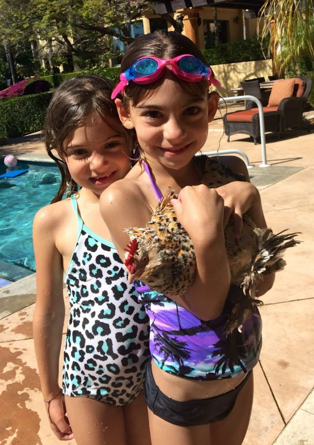 Somehow, the chickens even ended up at the pool: Viv, Ev and Pippa.