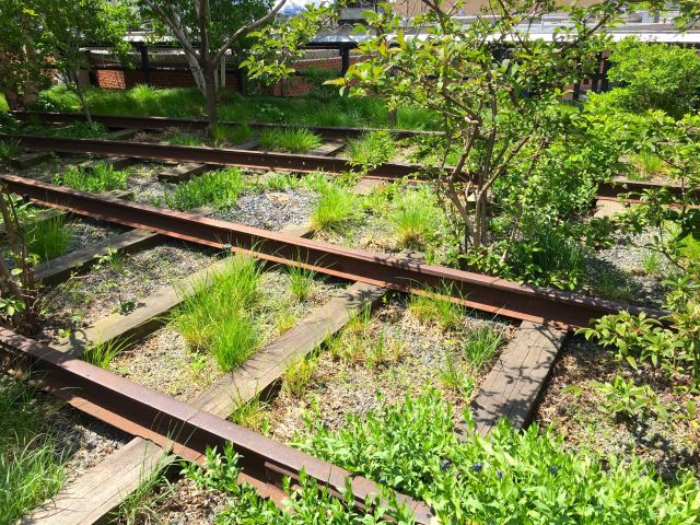 You can catch a glimpse of the old tracks as you stroll the High Line.