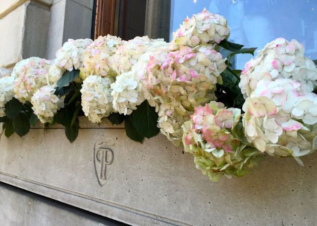 Hydrangeas in a planter outside The Plaza on Central Park South.