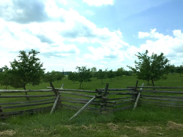 Part of the National Park's Service commitment to restoring the battlefield to its original state included re-planting peach trees in The Peach Orchard, where the Confederates collapsed the Union line on the second day of battle at Gettysburg.