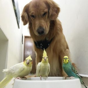 Bob and his friends (image from dogchannel.com)