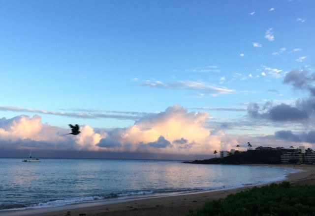 A bird in flight and I enjoy the sunrise at Black Rock, Ka'anapali.