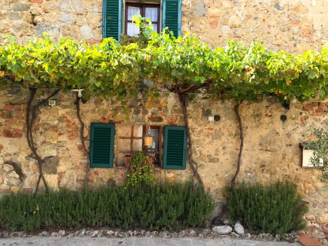 A grape arbor shades a building in the tiny hill town of Monterrigio.