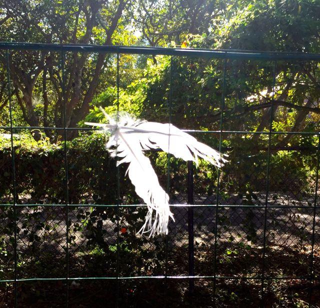 luna last feathers