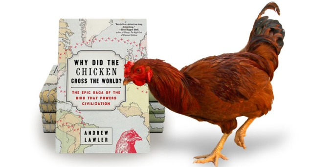 chicken-book-with-bird-1