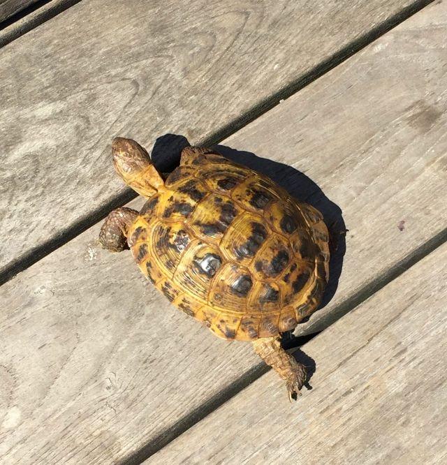 tortoise high line march 2016