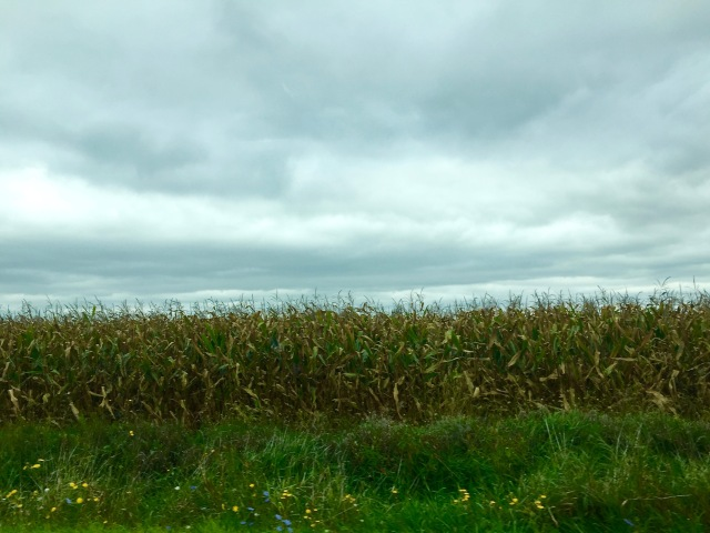 michigancorn2016
