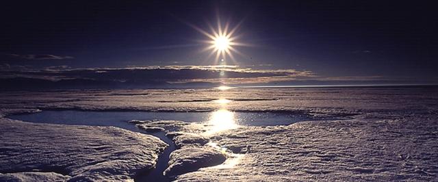 narwhal-sun