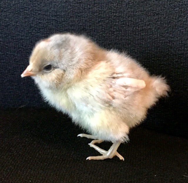 chick first pic may 21 2017