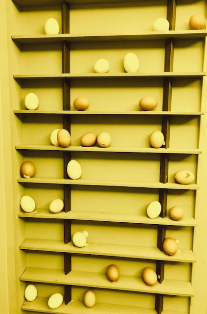 eggshelves