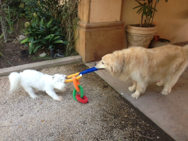 chloe soho tug of war by Lori