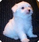 enh soho puppy pic